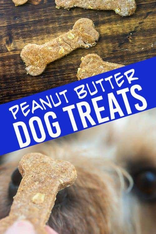 Homemade peanut butter dog treats! I love knowing what is in the treats my fur-babies are eating! #petfood #dogs #dogtreats